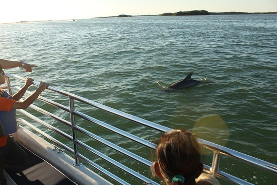 Gulfport, Флорида: St Pete Beach Dolphin Watch Boat Tours