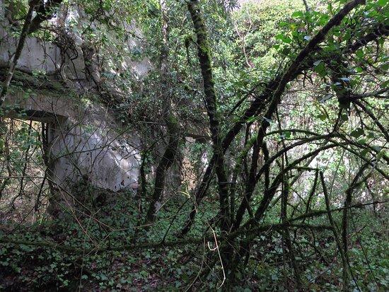 Cascate Dell'Acquarossa: la vegetazione che cresce all'interno dei ruderi
