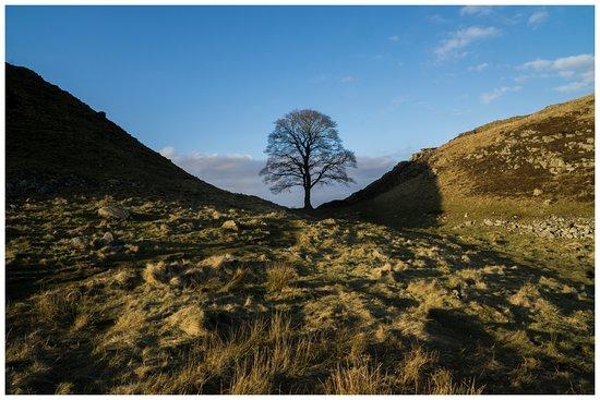 Walltown Crags - Hadrian's Wall : Sycamore Gap (Robin Hood Tree)