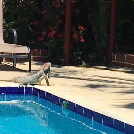 Hotel Mar de Luz: photo0.jpg