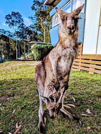 Durras North, Australia: IMG_20180223_181811_large.jpg