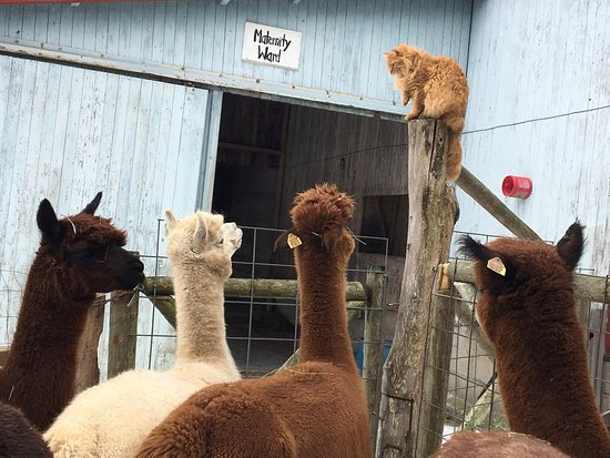 Bloomfield, Estado de Nueva York: The cat was stealing the show!