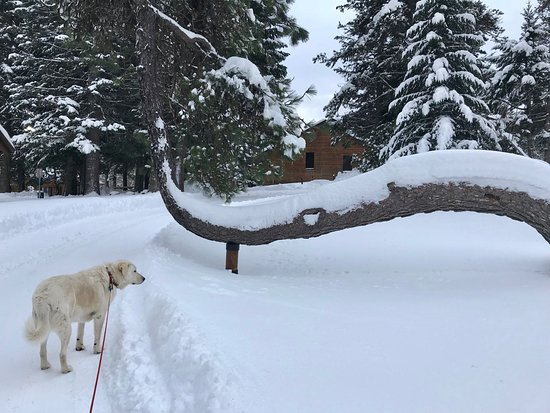 Parkdale, OR: My dog examines the famous crooked tree from where the restaurant gets its name.