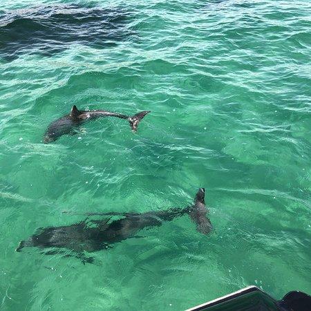 Kangaroo Island Marine Adventures: photo2.jpg