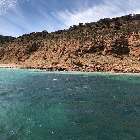 Kangaroo Island Marine Adventures: photo5.jpg