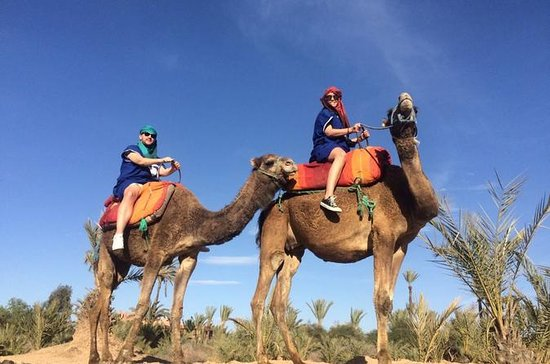 Small-Group Tour: Camel Ride through...
