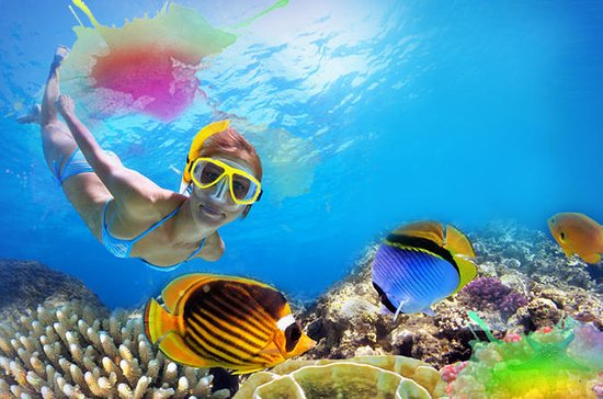 Cozumel 1-Hour Snorkeling Tour with Lunch