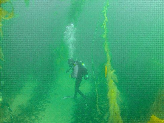 Trident Divers - NAUI SCUBA Certification, Guided Dives, Snorkel ...