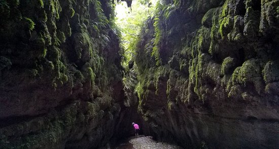 Apiti, نيوزيلندا: River bed / ravine