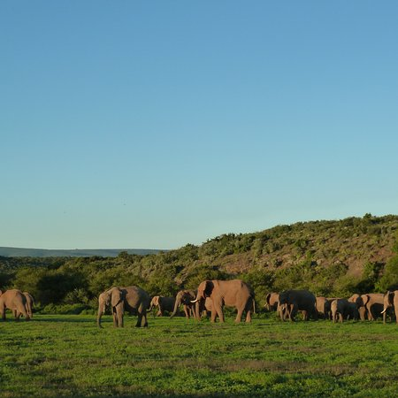 Kwandwe Private Game Reserve, Sør-Afrika: photo6.jpg