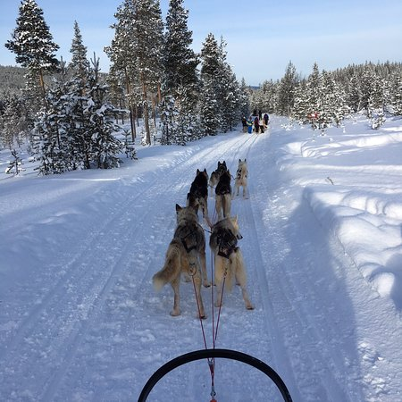 Kamisak Husky and Horse Expeditions - Day Tours: photo4.jpg