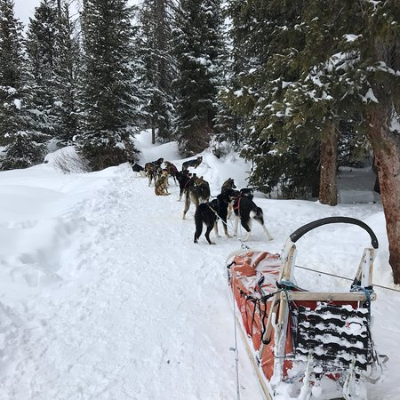 Continental Divide Dog Sled Tours