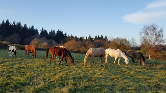 Beaumont Pied De Boeuf, France: Our horses live outside in groups. Here our foals !