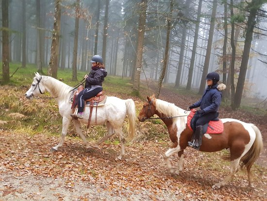 Beaumont Pied De Boeuf, France: Riding our arabian and paint horses in the woods is always a magical moment.