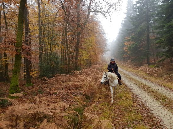 Beaumont Pied De Boeuf, France: Come ride with us, the Bercé forest is beautiful at all times !