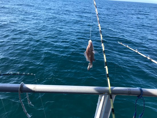 Just caught bro and sis picture of dolphin deep sea for Dolphin deep sea fishing