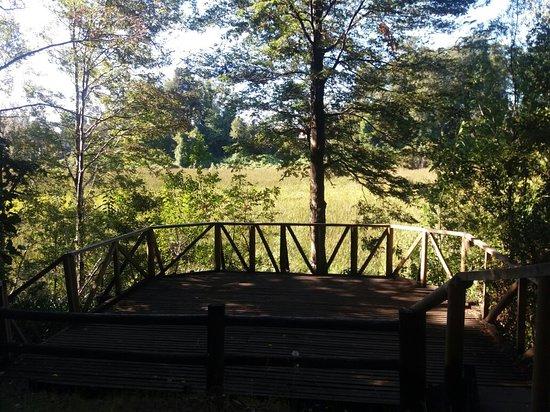 Parque Urbano El Bosque