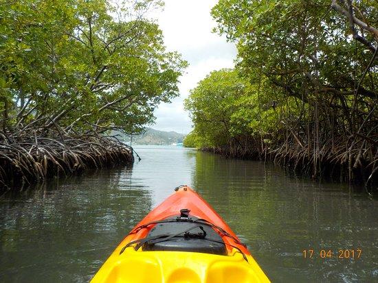 La mangrove du Vauclin en kayak