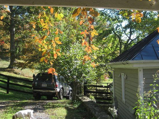 Sperryville, VA: Sun shining through the fall leaves of the Virginia creeper on the porte cochere.