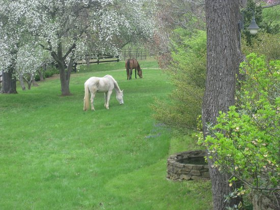 Sperryville, Вирджиния: Horses grazing on the grounds, which is a rare treat for them.