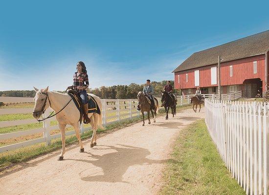 Greater Gettysburg, PA: Horseback Tours at Gettysburg National Military Park