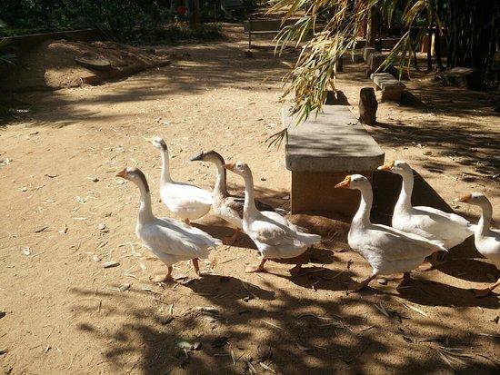 Ramnagaram, Indien: IMG_20180218_152417_large.jpg