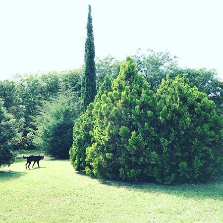 Foto de La casa de loslimoneros