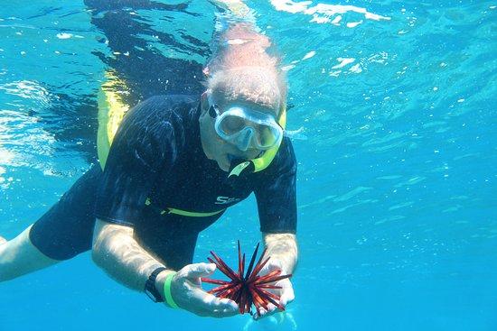 Aqua Adventures: Ken holding a sea urchin
