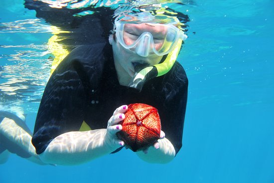 Aqua Adventures: Patricia holding a ? (forgot the proper name)
