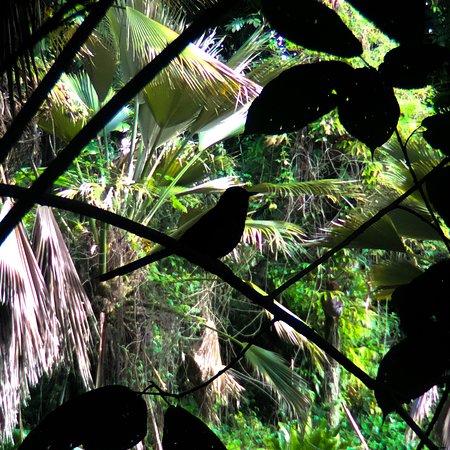 Wahiawa Botanical Garden: photo0.jpg