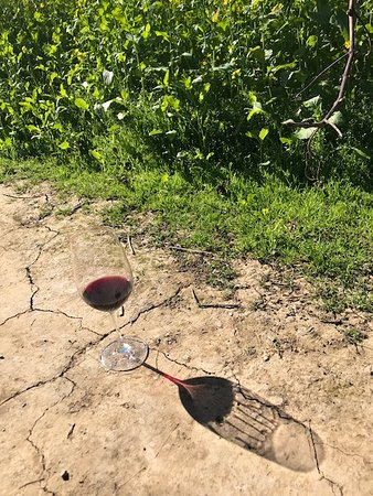 Rutherford, CA: Wine and Earth