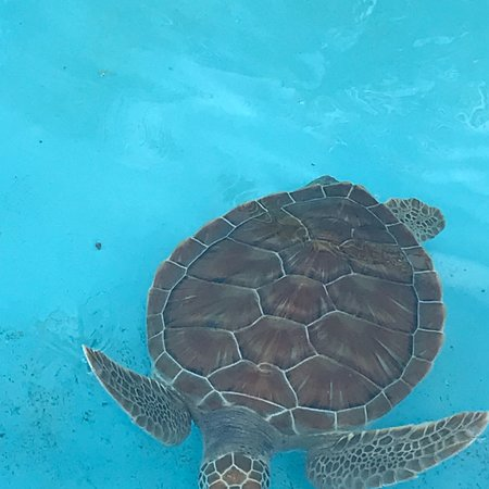 Sea Turtle Hatchery : photo1.jpg