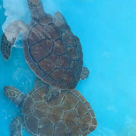 Sea Turtle Hatchery : photo5.jpg