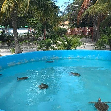 Sea Turtle Hatchery : photo7.jpg