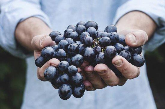 Douro Grape Harvest Small Group Tour ...