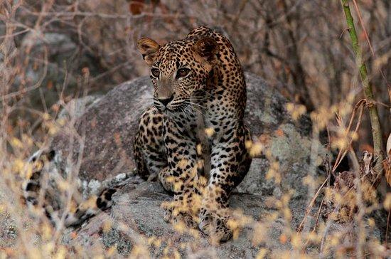 Private Half Day Safari at Yala...