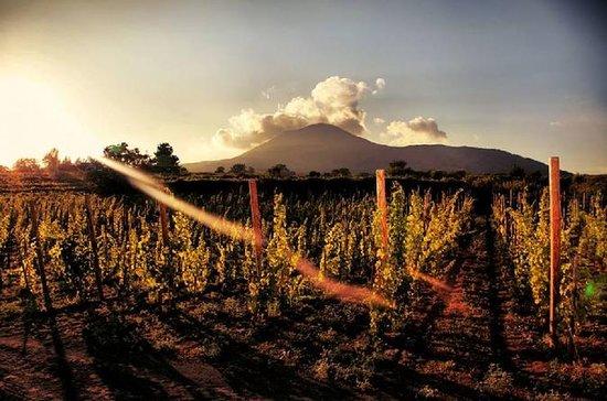 Dégustation de vin sur les versants...