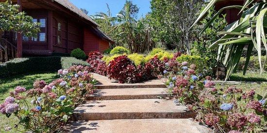 Jardin aménagé - Picture of Coffee Plantation, Sen Monorom ...