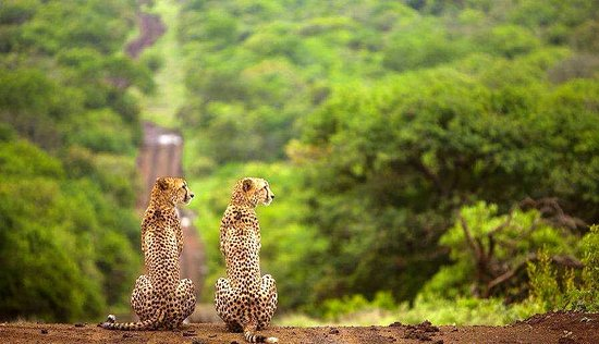 Wildtrek Tanzania Safaris