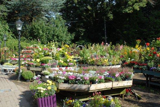 Avoca Mount Usher Garden Centre - Picture of The Garden Cafe ...