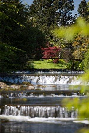 Ashford, Irlandia: Mount Usher Gardens