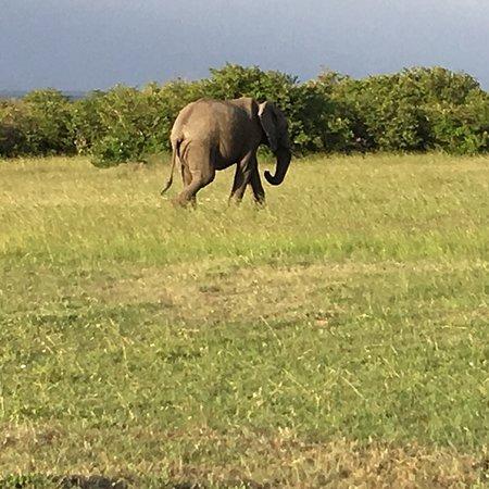 F. King Tours and Safaris - Day Tours: photo8.jpg