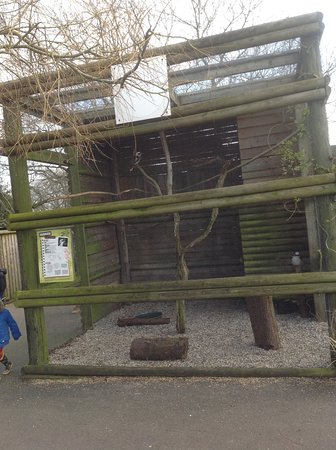 Knockhatch Adventure Park: Two Kookaburras