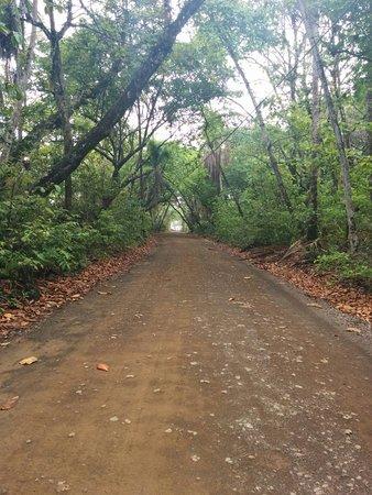 Pavones, Costa Rica: IMG_20160421_093220_large.jpg