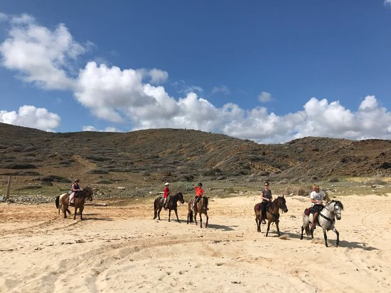 thanks for choosing to ride with us aruba horsebackriding beach