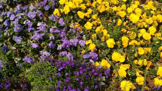 Canteiro De Flores Picture Of Le Jardin Parque De Lavanda Gramado
