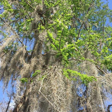 Houma La Swamp Tours