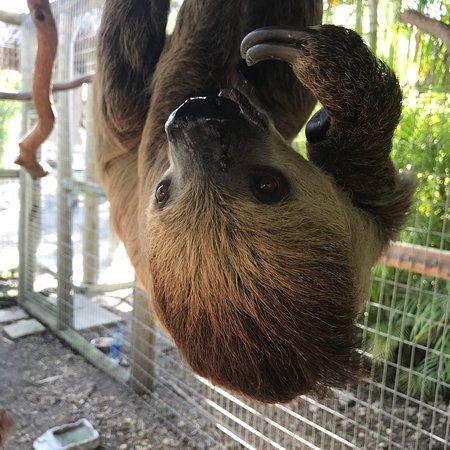 Zoological Wildlife Foundation: photo3.jpg