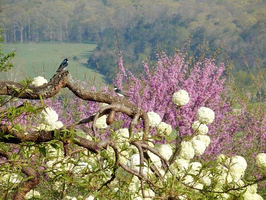 Birdsong Pleasure Garden