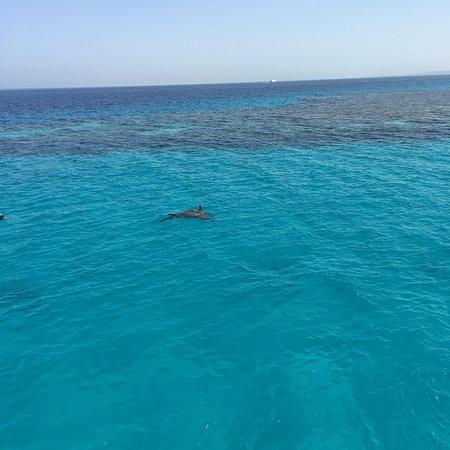 Blue Paradise Diving Center: photo0.jpg
